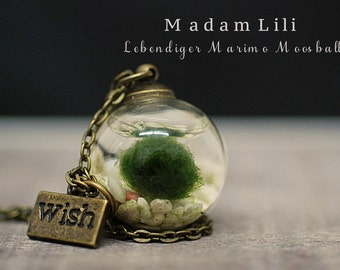 Alive Marimo Moss Ball with Bronze Chain