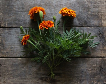 French Marigold, organic heirloom seeds, flower seeds, organic gardening, natural pest control, companion planting, gardener