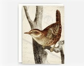 """Vintage Bird Etching Collage Greeting Card No. 2, Blank Note Card, 5""""x7"""" Note Card"""