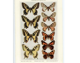 1894 ANTIQUE BUTTERFLY LITHOGRAPH butterfly moth original antique insect print