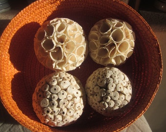 SEED BALLS PODS  Set of Four Plus Wicker Orange Basket