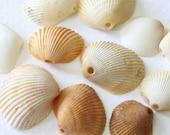 LOT of 11 Sea Shells, Shells, Jewelry Supplies, Beach Jewelry, Real Sea Shells, Drilled Sea Shells, Lot of Supplies, Destash