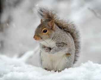 Funny Squirrel Photo Etsy