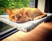 Manchester - Curious Cats Window Perch