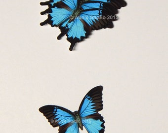 Paper Butterflies, Butterfly punches, Butterfly confetti, 10 Mountain Blue Swallowtails