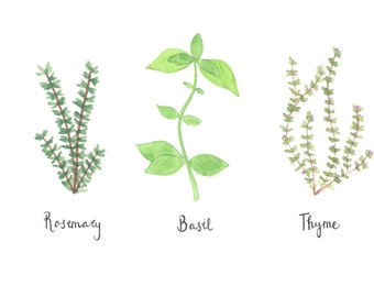 Basil Rosemary and Thyme Watercolor - Instant Download