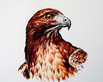 Red Tailed Hawk Portrait - Original Watercolour painting