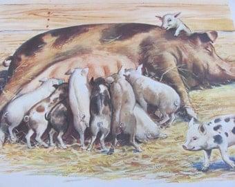 "Print - Original Vintage School Classroom Poster Print - Circa 1966 - Farm Animals Pigs Piglets - 9"" x 12"""