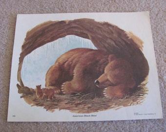 "Original Vintage School Classroom Poster Print - Circa 1965 - Seasons Bear - 9"" x 12"""