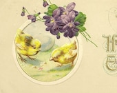 John Winsch Vintage Easter Postcard Pair of Yellow Chicks and Spring Violets Charming Embossed Spring Postcard 1914