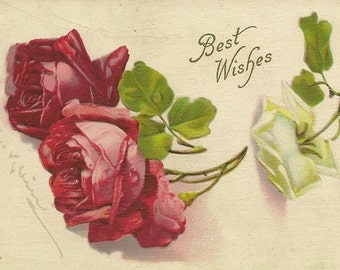 Two Deep Red Roses and One White Rose Bloom Catharina Klein  Antique Postcard 1910