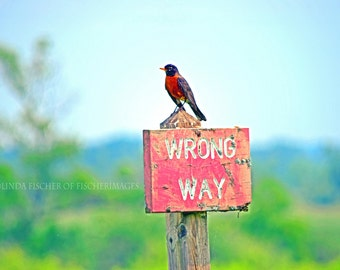 """Robin on Red Wooden Sign """"Wrong Way"""" Landscape Nature Wall Art Home Decor Digital Download or Photo Print Fine Art Photography Fischerimages"""