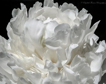 White PEONY FLOWER Photography, GARDEN Art, Nature Print, Macro, Colorful, White, Pastel, Spring,