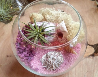"Small Air Plant Terrarium Kit by Midnight Blossom - ""Fishbowl"" Style Tabletop Terrarium - Awesome DIY Tillandsia Terrarium"