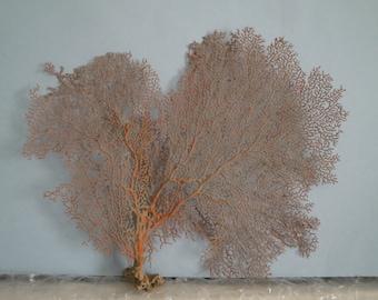 "13"" x 11"" Pacifigorgia Red  Sea Fan Seashells Reef Coral"
