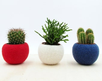4th of July decor / patriotic decor / Independence day usa flag colors / succulent planter collection / Red White Blue / Succulent terrarium