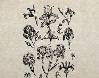 80% OFF - Cut flowers and buds sketch (Image 92) - PNG / JPG Digital Image Download - Transfer / Iron on / Clip-art / Commercial Use