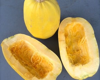 Spaghetti Squash Winter Squash Heirloom Variety Excellent Flavor Top Quality Seeds Grown to Organic Standards Easy to Grow