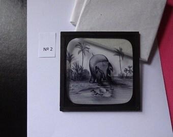Magic Lantern Slide, Victorian Glass Slides, Victorian Toys, Elephants Revenge, Lantern Slides No. 2