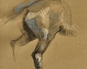 Equine nude XVIII, Hindqu...
