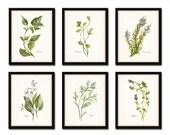 Watercolor Herbs Print Set No. 1, Botanical Prints, Giclee, Art, Herb Prints, Kitchen Art, Botanical Print Set, Herbs, Watercolor Art