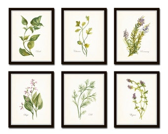 Watercolor Herbs Print Set No. 1, Botanical Prints, Giclee, Art, Herb Prints, Kitchen Art, Botanical Print Set, Herbs, Watercolor Art