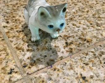bone china gray cat kitten laying down