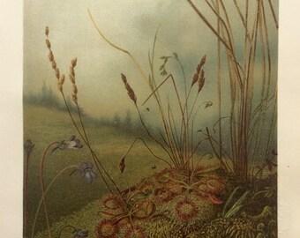 Antique CARNIVOROUS PLANTS German BOTANICAL Print Victorian Chromolithograph Leipzig Vintage Bookplate