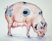 pig painting-Gloucestershire old spot original art