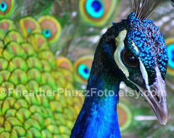 Peacock Display Wildlife Photography Fine Art Nature Print, Bird Photo, Peacock Home Decor, Children Nursery Wall Art