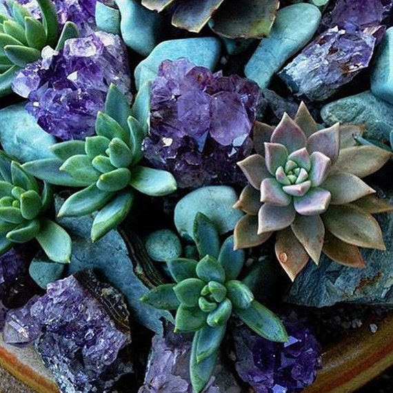 Image result for succulents and crystals