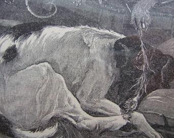 Antique Illustration - Antique Dog Print - Black and White Print - Antique Ephemera - Vintage Ephemera