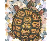Box Turtle No.1, Archival Print of Original Watercolor, you choose size