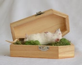 Taxidermy mouse in coffin.