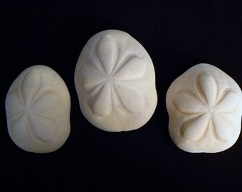 "Two Sea Biscuits 4 - 5"" giant seashells sand dollar beach decor wedding coastal living"