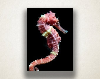 Seahorse Canvas Art, Seahorse Close Up Wall Art, Animal Canvas Print, Artistic Wall Art, Photograph, Canvas Print, Home Art, Wall Art Canvas