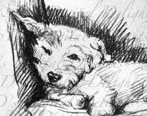 Sweet Sleepy BICHON Frise! Vintage Dog Illustration. Dog Digital Download. Digital Dog Printable Image! Bichon Frise Vintage Print!.