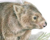 Wombat - Australian wildlife art greeting card. Pencil illustration. Bare-nosed Wombat, Common Wombat with grasses, on paper