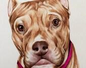 Custom Pet Portraits, Pit, Pitbull, Colored Pencil, Drawing, Illustration, Custom Dog