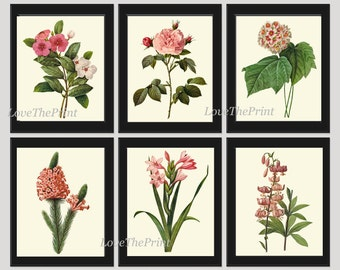 Botanical Print Set of 6 Art  Redoute Antique Beautiful Flowers Pink Coral Laurier Rose Snowball Periwinkle Gladiolus Home Wall Decor