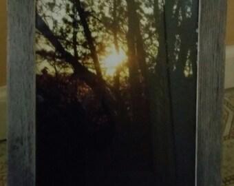 CaptureMoments!  Sun through the trees :)