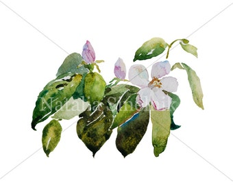 Quince spring twig with leaves digital download from original watercolor garden illustration, cottage chic style painting clipart jpeg, png