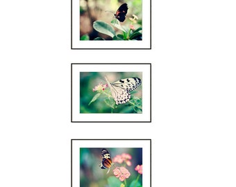 Set of 3 Butterfly Prints