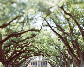 Louisiana photography, oak alley plantation, oversized wall art, historic architecture, cream decor, fine art print, live oaks, moody