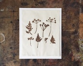 """Cow Parsley Lino Print, Limited Edition of 20, 9x11"""", Sepia Brown"""