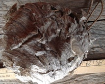 Huge  Bald Face Hornet  Nest -  Perfect conservation piece for your Man Cave