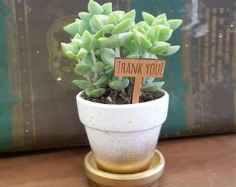Wedding favor mini planters, mini succulent pots, gold planters