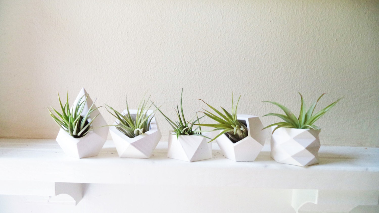 Geometric planters set of air plant holders book shelf mini for Geometric air plant holder
