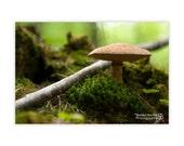 Mushroom Gnome Forest. Photographic Print by Sheldon Buchler.
