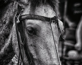 Work Horse | Leon | Nicaragua | Home Decor | Wall Art | Fine Art Photography | Print | Matted